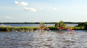 Mexico 4 – Ria Lagartos, or the Story of Salt, Clay and Flamingos