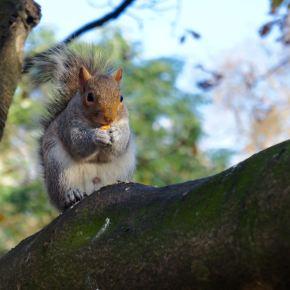 Squirrels of HydePark